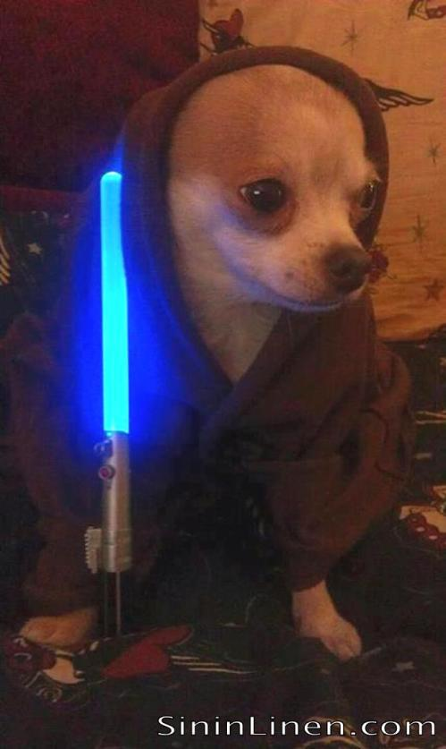 "Jedi Dog says ""You want to sleep on Sin in Linen"""